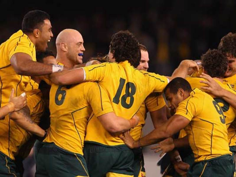 Large wallabies huddle630