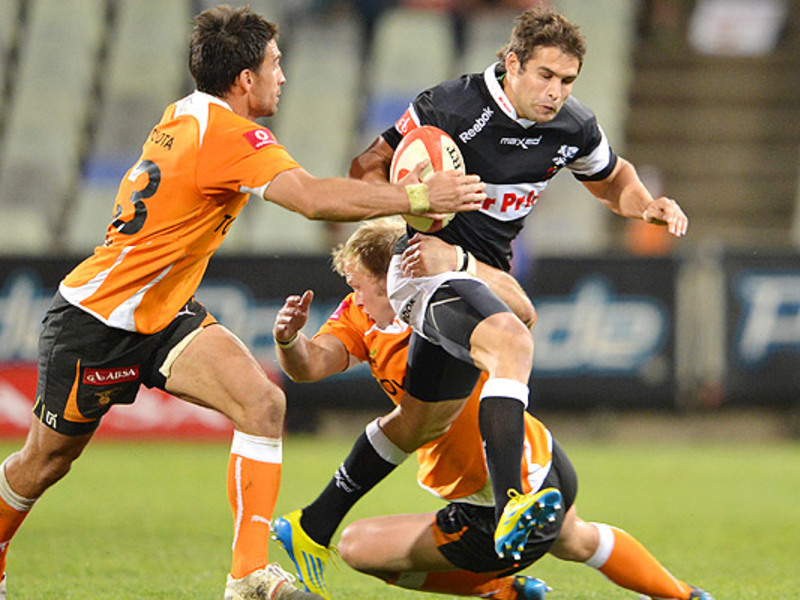 Large cobus reinach sharks run 63