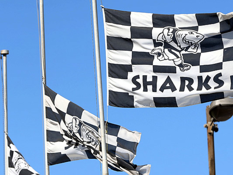 Large sharks flags