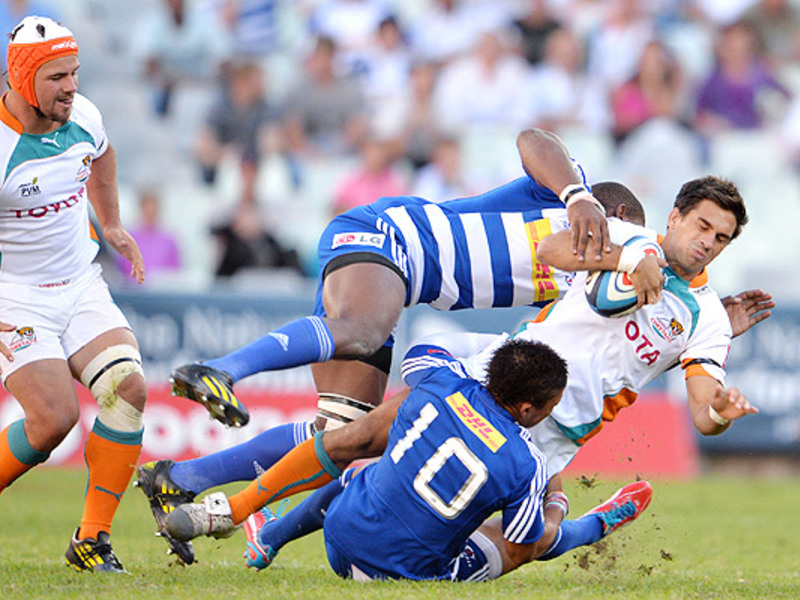 Large cheetahs v stormers2