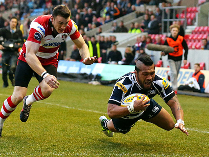 Large johnny leota sale sharks tr