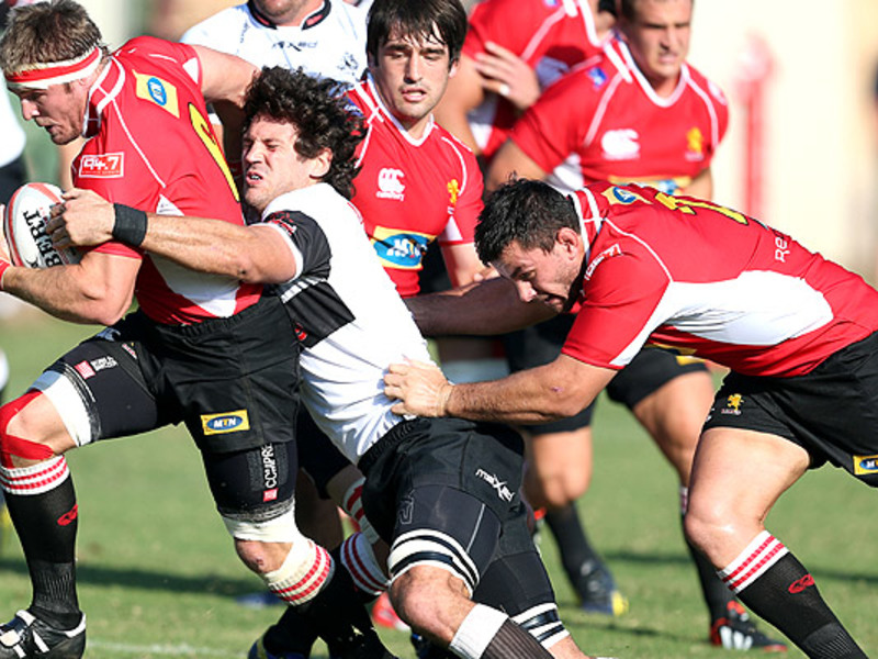 Large golden lions v sharks
