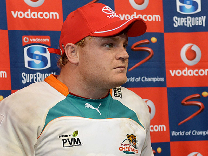 Large adriaan strauss cheetahs in