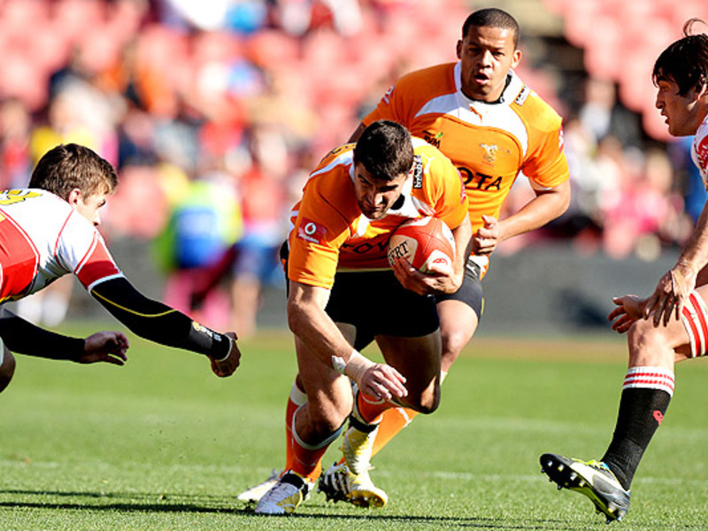 Large hennie daniller cheetahs v