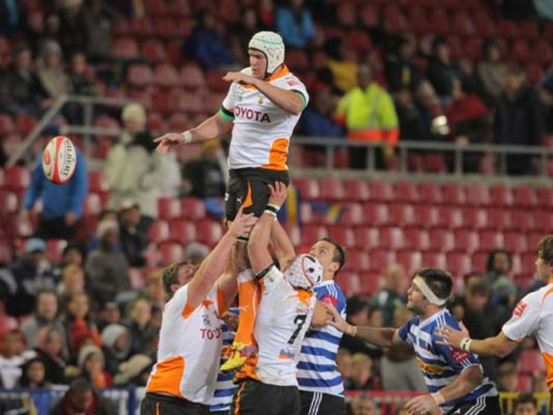 Large cheetahs line out630