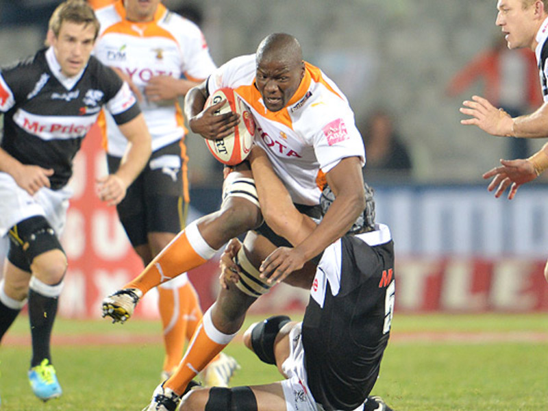 Large cheetahs v sharks