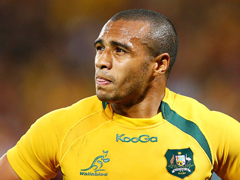 Large will genia wallabies looks