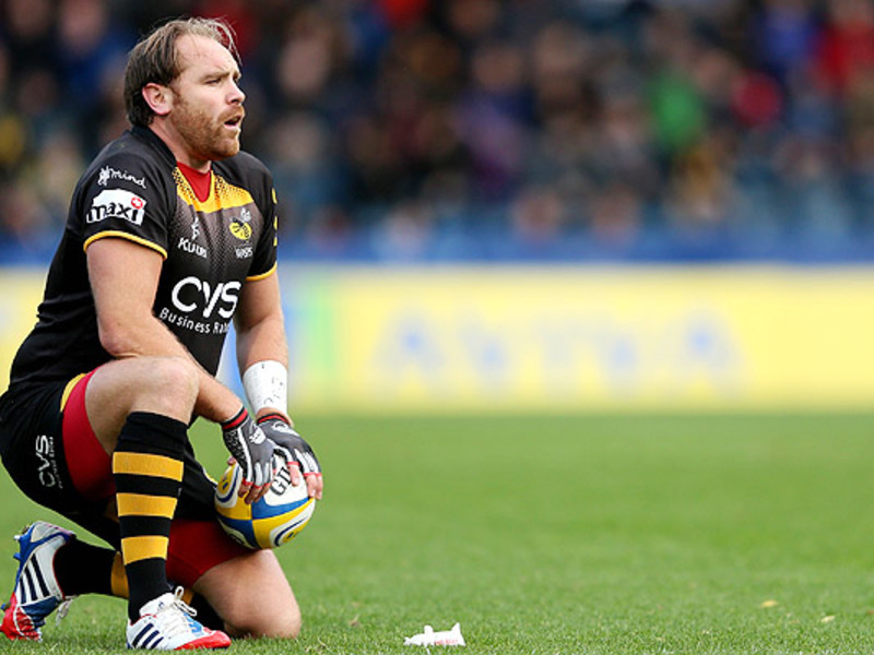 Large andy goode wasps