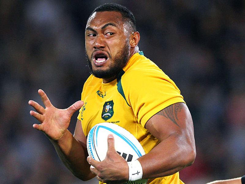 Large sekope kepu wallabies runs