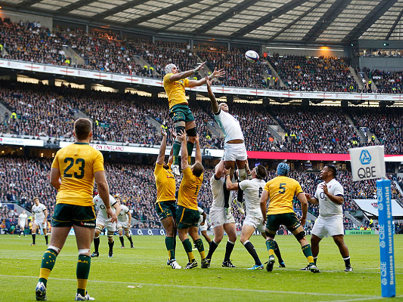 Large wallabies twickenham