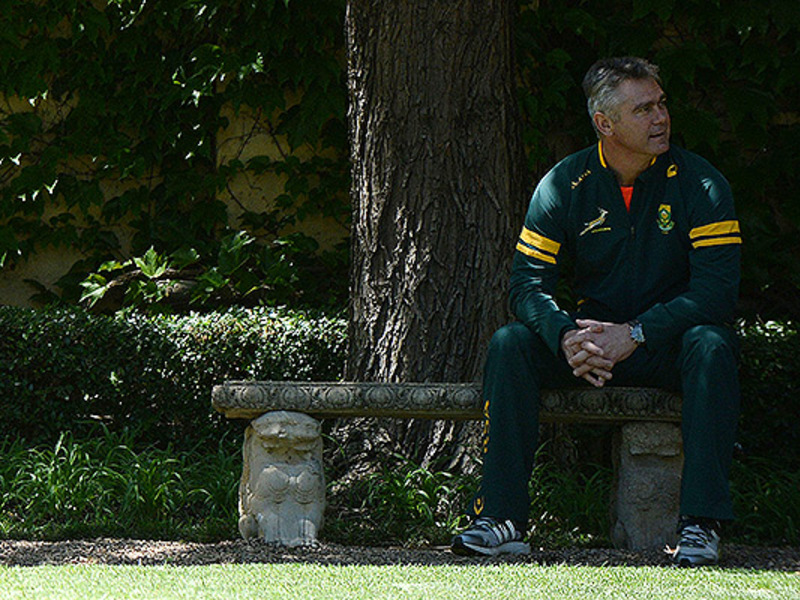 Large heyneke meyer on bench