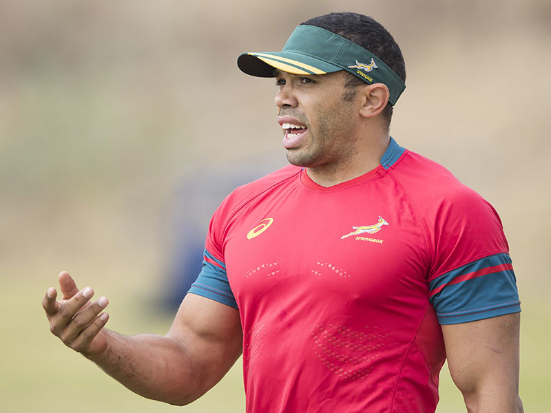 Large bryan habana bok training 800