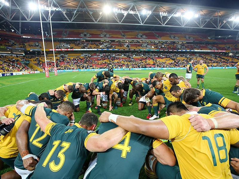 Large boks wallabies pray 800