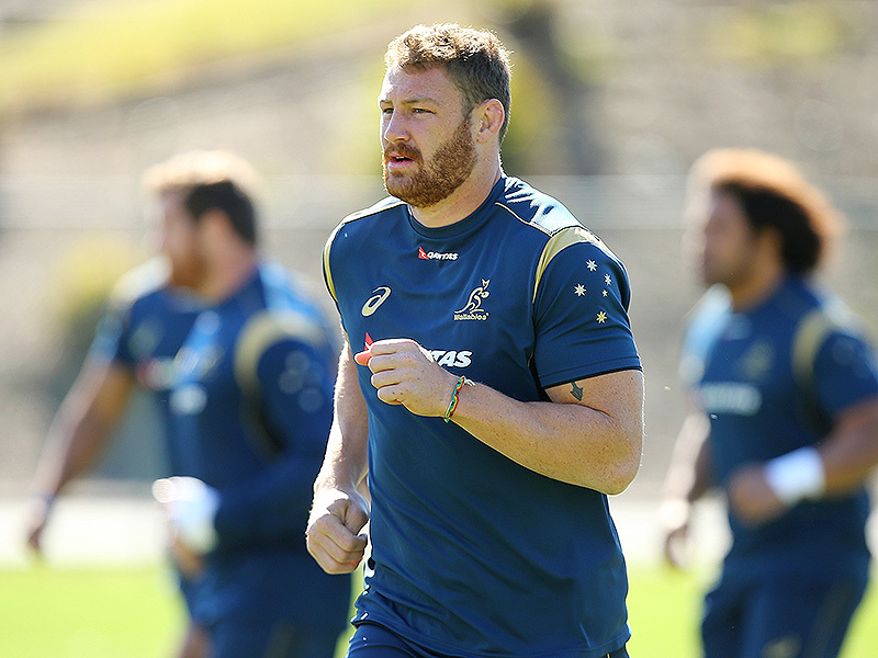 Large scott higginbotham wallabies train 800