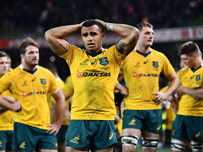 Large will genia wallabies dejected 800