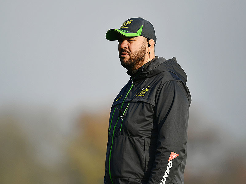 Large michael cheika observes 800