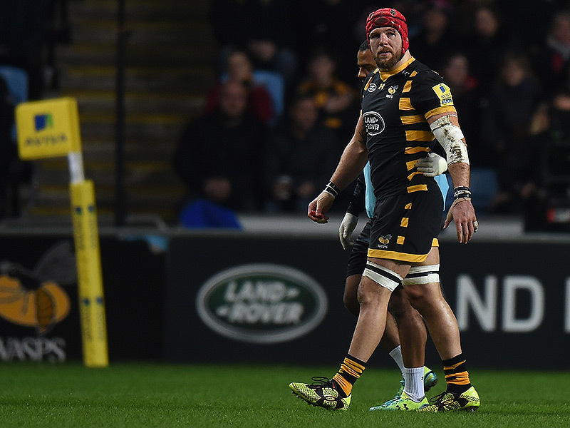 Large james haskell wasps 800
