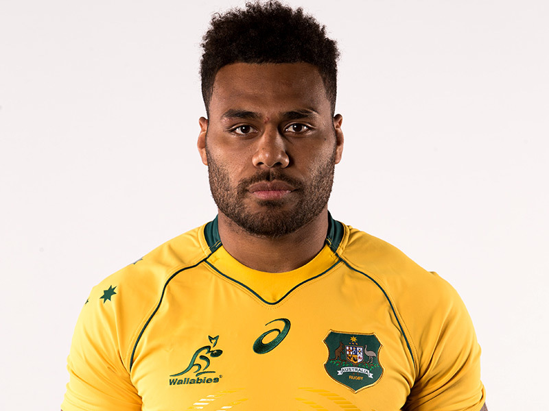 Large samu kerevi wallabies 800