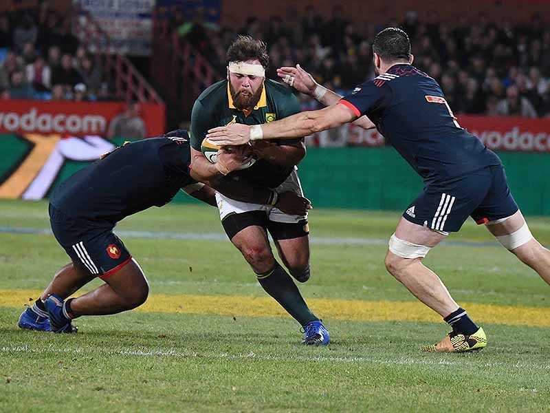 Large frans malherbe springbok charges 800