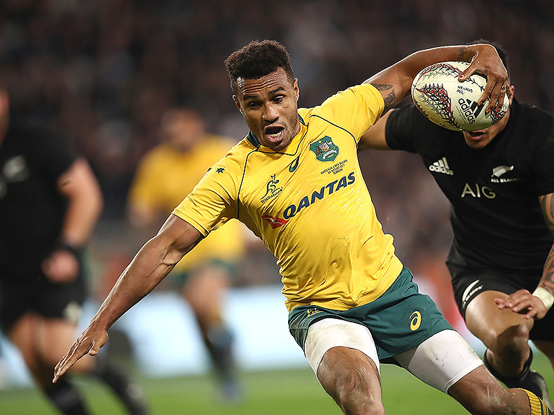 Large will genia wallabies evades 800