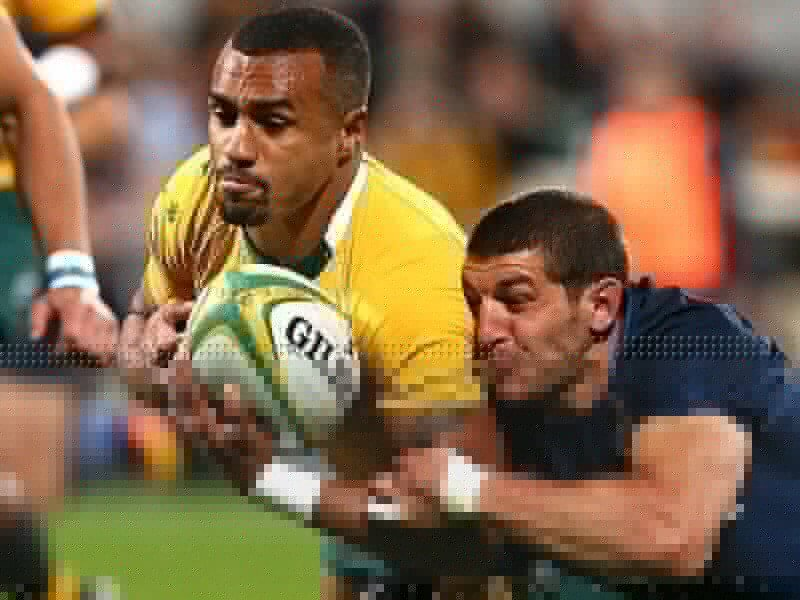Wallabies on the rise