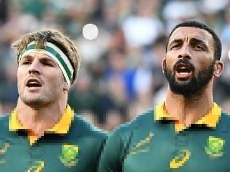 Springbok joins Scarlets