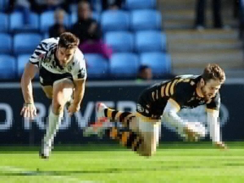 Wasps annihilate Zebre
