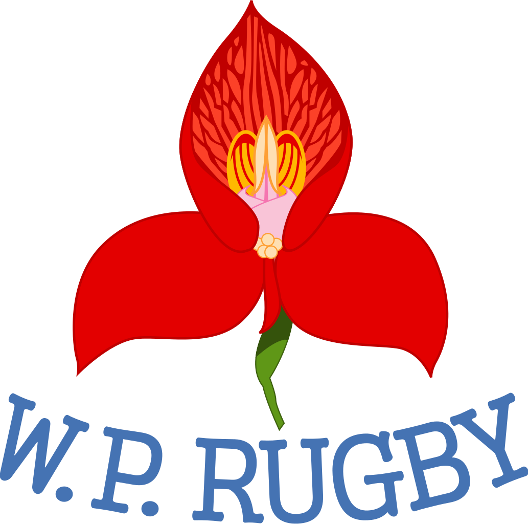 Operation To Save Wp Rugby Underway Rugby365